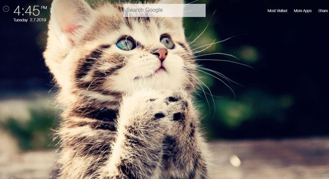 Cute Cats And Kittens Hd Wallpapers Theme Chrome Extension Chrome Extensions Qtab